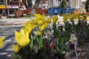 80 Çeşit Çiçek ve Bitki Türü Yetiştiriliyor